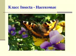 Класс Insecta - Насекомые