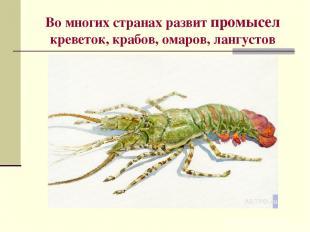 Во многих странах развит промысел креветок, крабов, омаров, лангустов