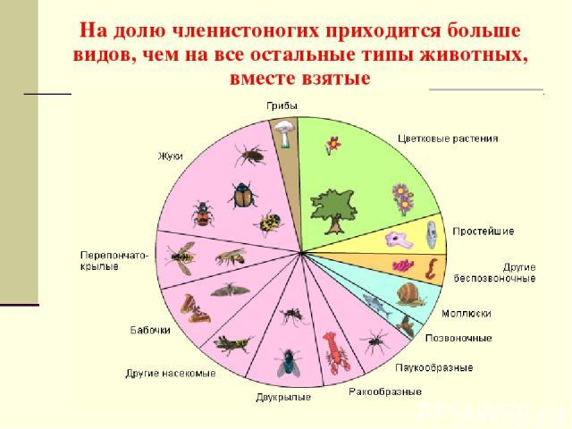 На долю членистоногих приходится больше видов, чем на все остальные типы животных, вместе взятые