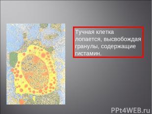 Тучная клетка лопается, высвобождая гранулы, содержащие гистамин.