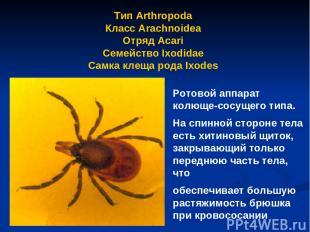 Тип Arthropoda Класс Arachnoidea Отряд Аcari Семейство Ixodidae Самка клеща рода