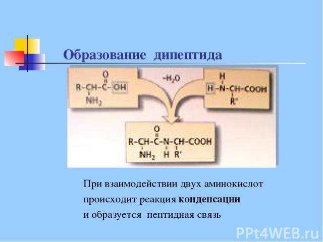 курсы обмена образование дипептидов из аминокислот некроманту хватит