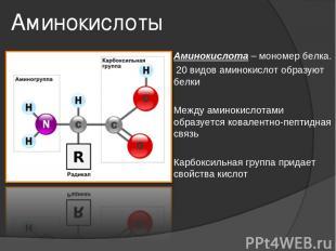 Аминокислоты Аминокислота – мономер белка. 20 видов аминокислот образуют белки М