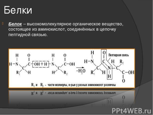 Белки Белок – высокомолекулярное органическое вещество, состоящее из аминокислот, соединённых в цепочку пептидной связью.