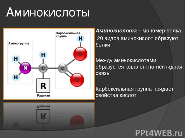 Аминокислоты Аминокислота – мономер белка. 20 видов аминокислот образуют белки Между аминокислотами образуется ковалентно-пептидная связь Карбоксильная группа придает свойства кислот