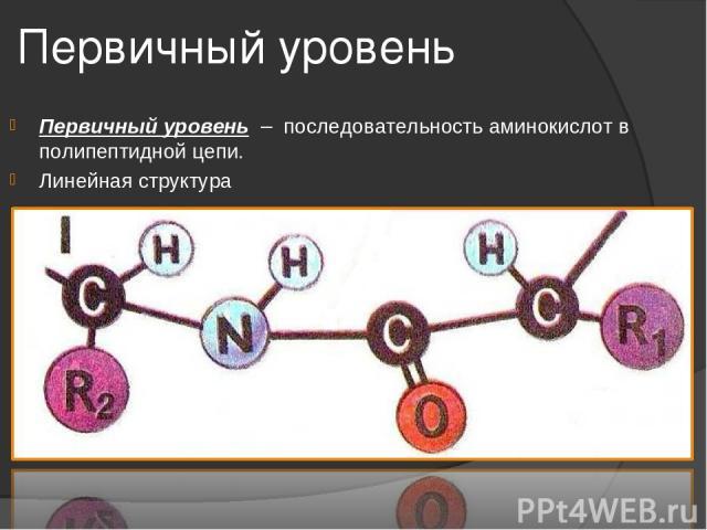 Первичный уровень Первичный уровень – последовательность аминокислот в полипептидной цепи. Линейная структура