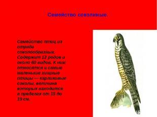 Семейство соколиные. Семейство птиц из отряда соколообразных. Содержит 12 родов
