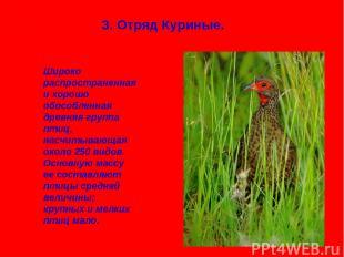 3. Отряд Куриные. Широко распространенная и хорошо обособленная древняя группа п
