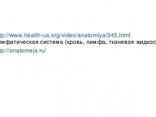 http://www.health-ua.org/video/anatomiya/345.html лимфатическая система (кровь,