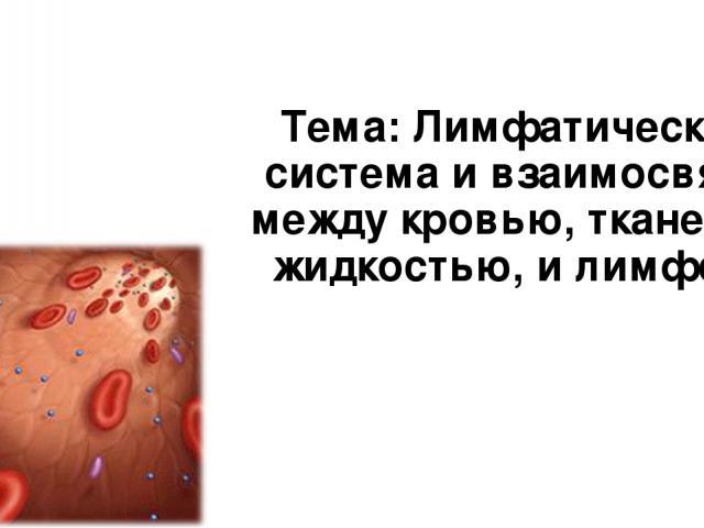 Тема: Лимфатическая система и взаимосвязь между кровью, тканевой жидкостью, и лимфой.