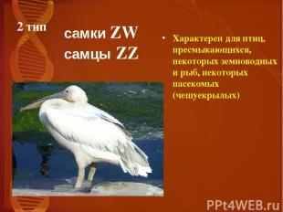 2 тип Характерен для птиц, пресмыкающихся, некоторых земноводных и рыб, некоторы
