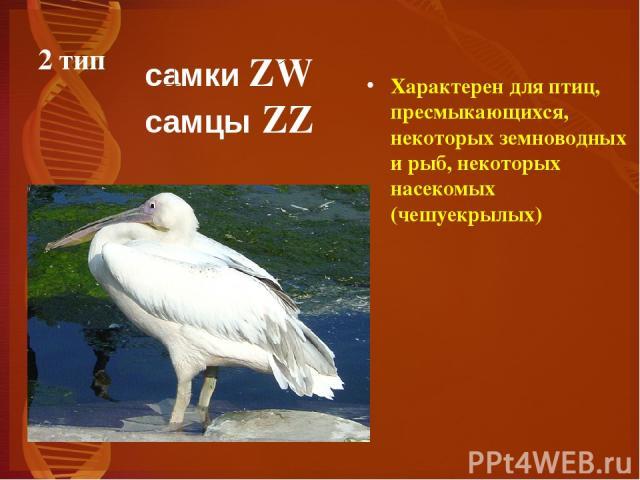 2 тип Характерен для птиц, пресмыкающихся, некоторых земноводных и рыб, некоторых насекомых (чешуекрылых) самки ZW самцы ZZ
