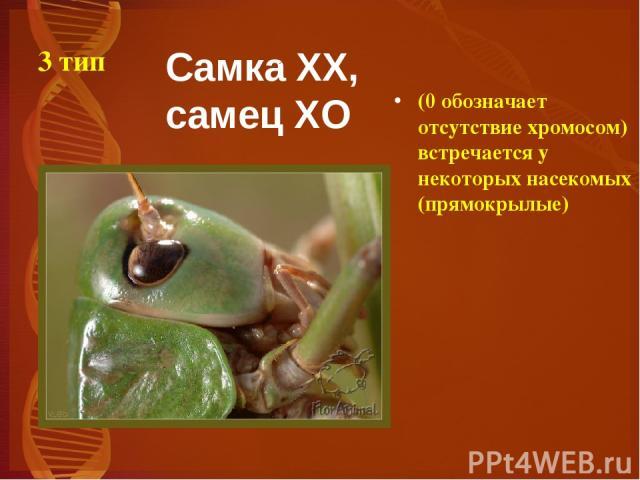 3 тип (0 обозначает отсутствие хромосом) встречается у некоторых насекомых (прямокрылые) Самка XX, самец XO