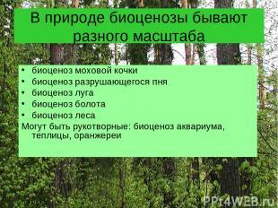 В природе биоценозы бывают разного масштаба биоценоз моховой кочки биоценоз разр