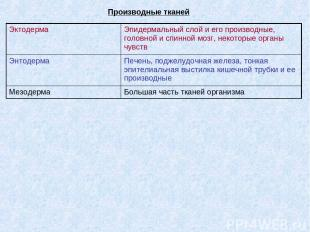 Производные тканей Эктодерма Эпидермальный слой и его производные, головной и сп