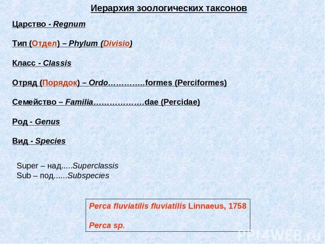 Царство - Regnum Тип (Отдел) – Phylum (Divisio) Класс - Classis Отряд (Порядок) – Ordo…………..formes (Perciformes) Семейство – Familia……………….dae (Percidae) Род - Genus Вид - Species Иерархия зоологических таксонов Super – над.....Superclassis Sub – по…