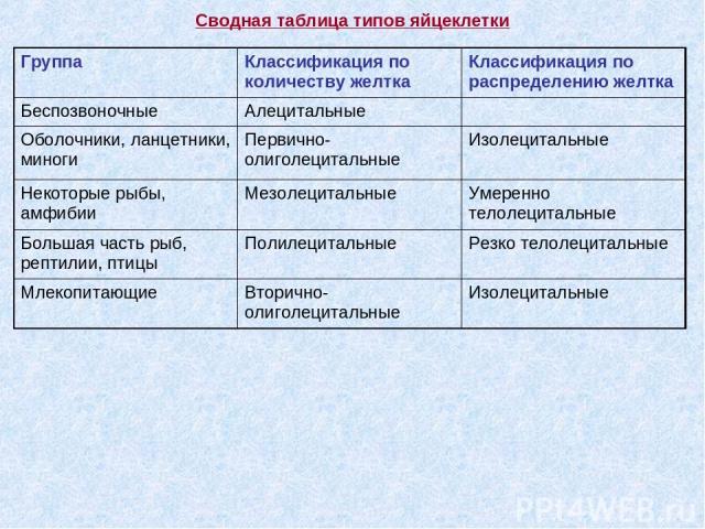 Сводная таблица типов яйцеклетки Группа Классификация по количеству желтка Классификация по распределению желтка Беспозвоночные Алецитальные Оболочники, ланцетники, миноги Первично-олиголецитальные Изолецитальные Некоторые рыбы, амфибии Мезолециталь…