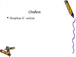 Ответ Анафаза II мейоза