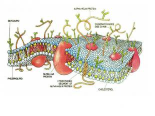 cellular movement essay Read and learn for free about the following article: cellular organelles and structure.