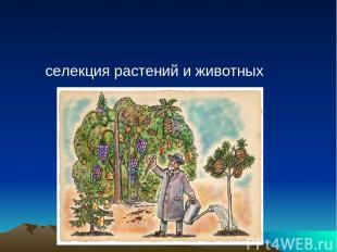 селекция растений и животных