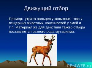 Движущий отбор Пример: утрата пальцев у копытных, глаз у пещерных животных, коне