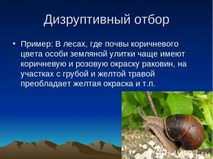 Дизруптивный отбор Пример: В лесах, где почвы коричневого цвета особи земляной у