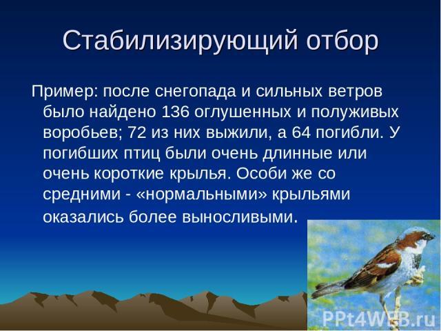 Стабилизирующий отбор Пример: после снегопада и сильных ветров было найдено 136 оглушенных и полуживых воробьев; 72 из них выжили, а 64 погибли. У погибших птиц были очень длинные или очень короткие крылья. Особи же со средними - «нормальными» крыль…