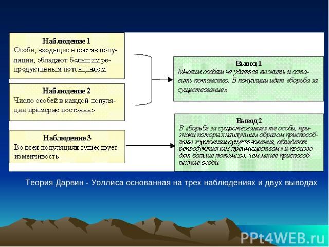 Теория Дарвин - Уоллиса основанная на трех наблюдениях и двух выводах
