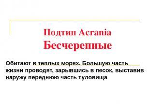 Подтип Acrania Бесчерепные Обитают в теплых морях. Большую часть жизни проводят,