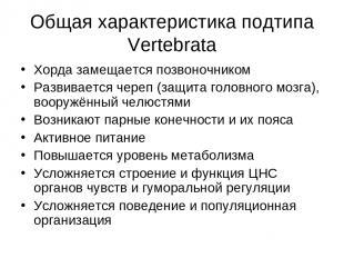 Общая характеристика подтипа Vertebrata Хорда замещается позвоночником Развивает