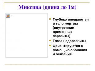 Миксина (длина до 1м) Глубоко внедряются в тело жертвы (внутренние временные пар