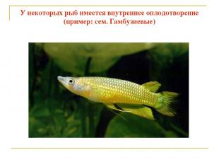 У некоторых рыб имеется внутреннее оплодотворение (пример: сем. Гамбузиевые)