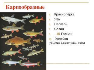 Карпообразные Краснопёрка Язь Пескарь Сазан - 10 Гольян Уклейка (по «Жизнь живот