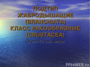 ПОДТИП ЖАБРОДЫШАЩИЕ (BRANCHIATA) КЛАСС РАКООБРАЗНЫЕ (CRUSTACEA) Около 40 тыс. ви