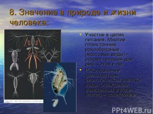 8. Значение в природе и жизни человека: Участие в цепях питания. Многие планктон