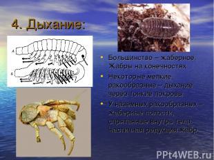 4. Дыхание: Большинство – жаберное. Жабры на конечностях Некоторые мелкие ракооб