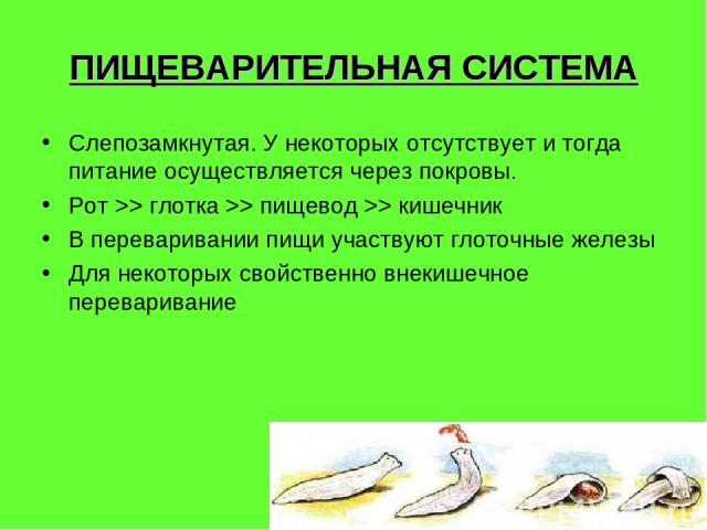 ПИЩЕВАРИТЕЛЬНАЯ СИСТЕМА Слепозамкнутая. У некоторых отсутствует и тогда питание осуществляется через покровы. Рот >> глотка >> пищевод >> кишечник В переваривании пищи участвуют глоточные железы Для некоторых свойственно внекишечное переваривание