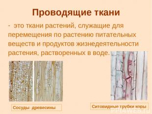Проводящие ткани это ткани растений, служащие для перемещения по растению питате