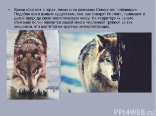 Волки обитают в горах, лесах и на равнинах Северного полушария. Подобно всем жив