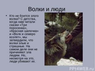 Волки и люди Кто не боится злого волка? С детства, когда нам читали сказки «Три