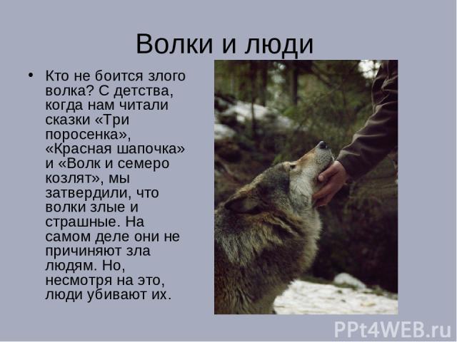 Волки и люди Кто не боится злого волка? С детства, когда нам читали сказки «Три поросенка», «Красная шапочка» и «Волк и семеро козлят», мы затвердили, что волки злые и страшные. На самом деле они не причиняют зла людям. Но, несмотря на это, люди уби…