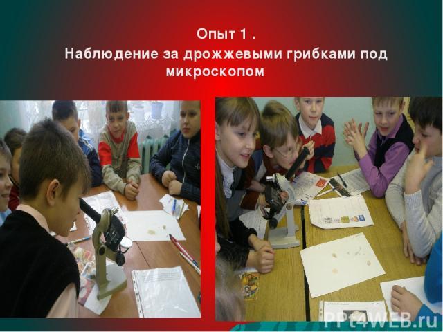 Опыт 1 . Наблюдение за дрожжевыми грибками под микроскопом