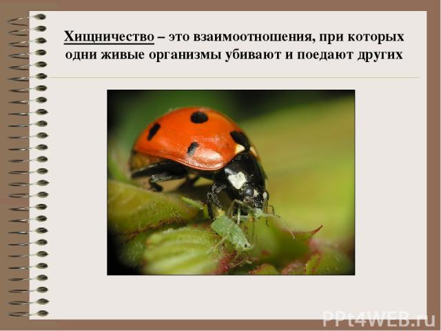 Хищничество – это взаимоотношения, при которых одни живые организмы убивают и поедают других