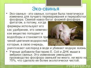 Эко-свинья Эко-свинья - это свинья, которая была генетически изменена для лучшег