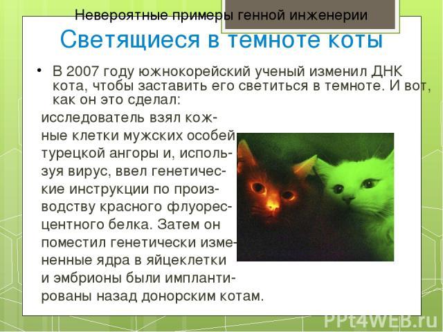 Невероятные примеры генной инженерии Светящиеся в темноте коты В 2007 году южнокорейский ученый изменил ДНК кота, чтобы заставить его светиться в темноте. И вот, как он это сделал: исследователь взял кож- ные клетки мужских особей турецкой ангоры и,…