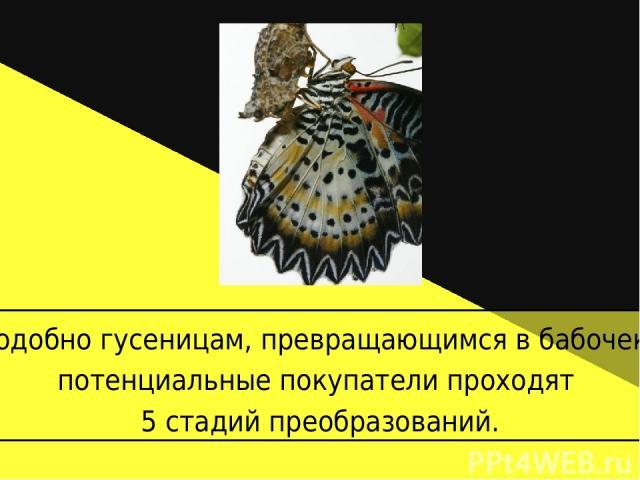 Подобно гусеницам, превращающимся в бабочек, потенциальные покупатели проходят 5 стадий преобразований.