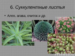 6. Суккулентные листья Алоэ, агава, очиток и др.