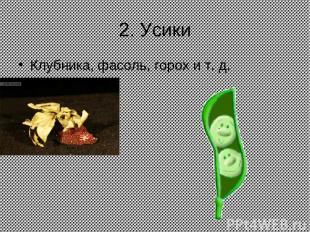 2. Усики Клубника, фасоль, горох и т. д.