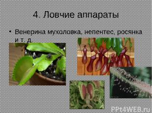 4. Ловчие аппараты Венерина мухоловка, непентес, росянка и т. д.