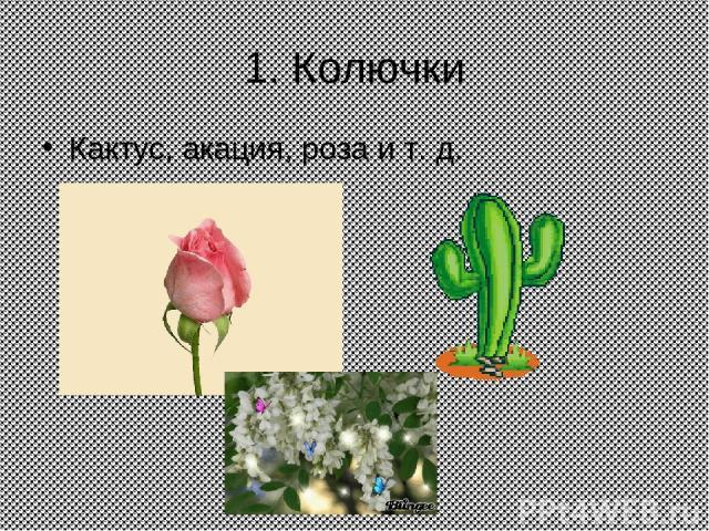 1. Колючки Кактус, акация, роза и т. д.